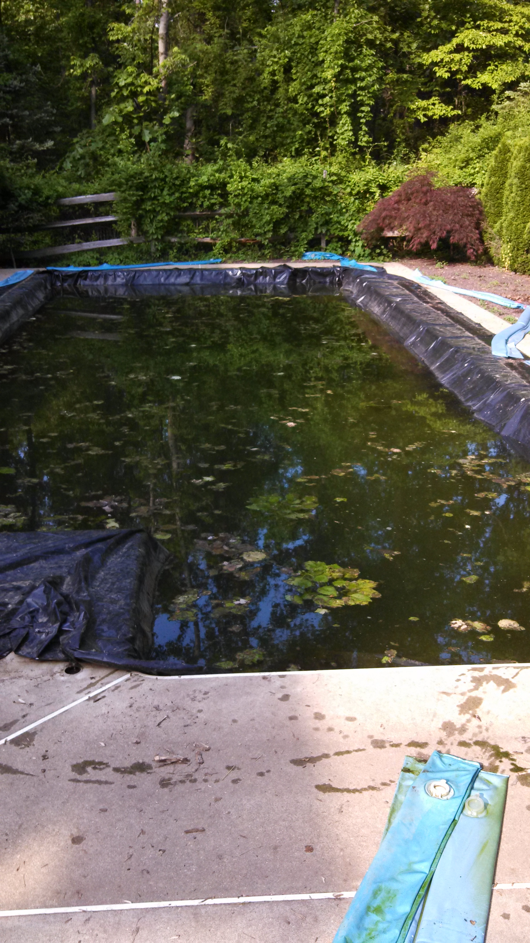 Algae Filled Pool